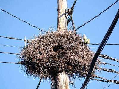 Parrot nest on 27th and Avenue I Brooklyn New York