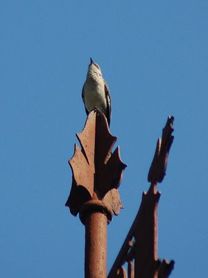 A mockingbird at Brooklyn's Green-wood cemetery enjoys his newfound fame.