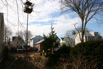 A view of a West Haven backyard where multiple wild parrot monk bunkers have been erected by local citizens