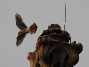 falcon_departs