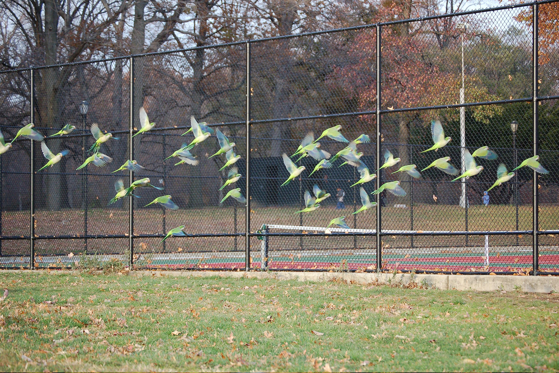 photo essay untamed birds in brooklyn