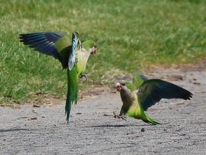 greenwood-parrots23