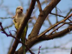 parrot-speaking-in-tree