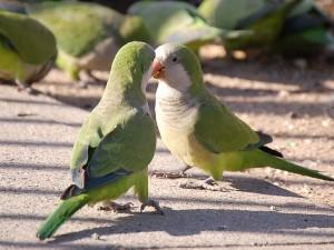 parrot_discussion