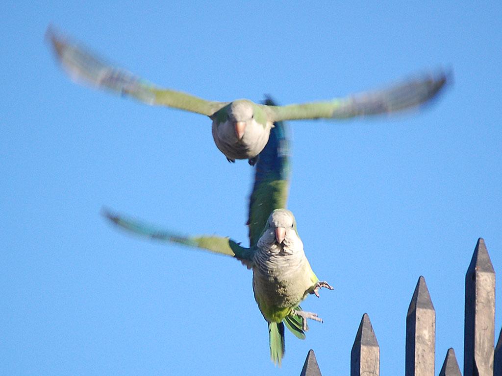 parrots-coming-at-ya-728367