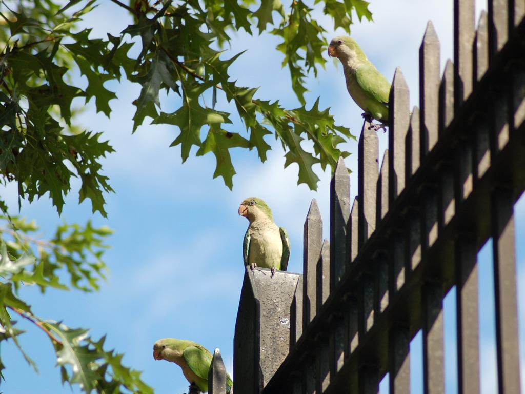 midwood_parrots_3_wise_bird