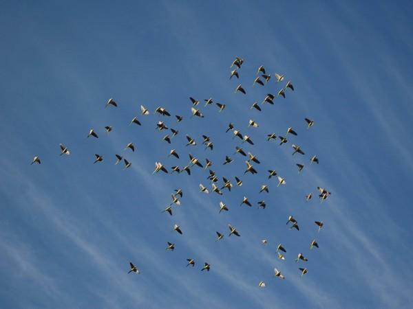 big-parrot-flock1-775117