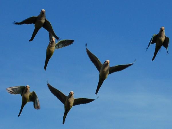 big-parrot-flock8-771984