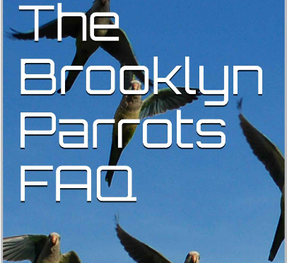 Brooklyn Parrots eBook