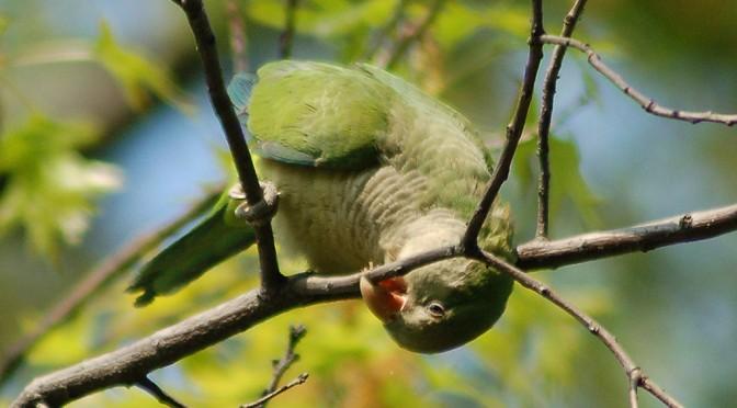Spotlight on the Capital Region Parrot Society