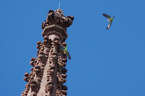 Green-Wood Cemetery, March 7, 2015: parrots on spire