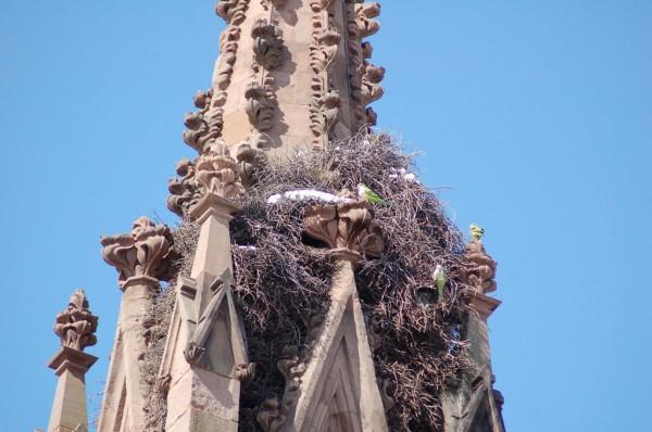 parrot-safari-3-7-15-gw-gate-nest1