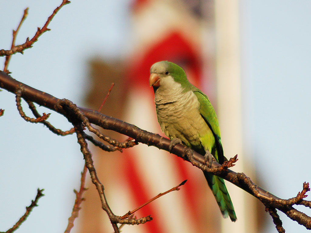 photo essay wild parrots of brooklyn Visit amazoncom's stephen c baldwin page and shop for all stephen c baldwin the wild parrots of brooklyn photo-essay: the day i inspected wild quaker.