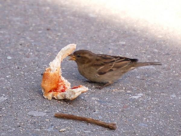 sparrow2-725915