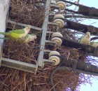 brooklyn-parrot-nest-3