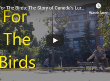 For The Birds: The Story of Canada's Largest Animal Rescue Endeavor – a film by Ben Life